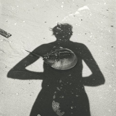 SELF-PORTRAIT STING RAY, 12 X 12 IN (IMAGE), 20 X 16 IN (PAPER) MODERN GELATIN SILVER PRINT, LTD. ED. OF 15 0120561